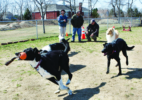 Several dozen dogs of all shapes and sizes enjoyed an afternoon of 'Spring Games' Saturday at the Southold Dog Park. The event was the first in a series of dog park parties scheduled for Saturdays between 1 and 3 p.m. at the park, behind the town recreation center in Peconic.